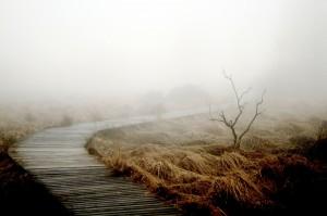 fog-258232_1920